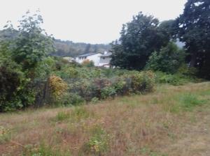 Amy Pond Park grass