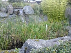 Selwyn Falls Pond