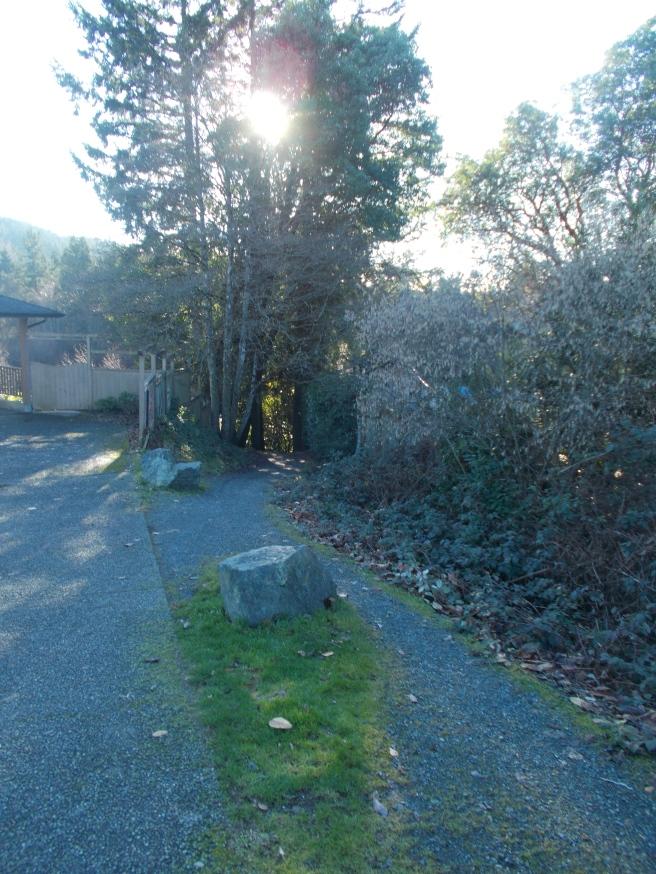 Cy Jenkins Trail 3