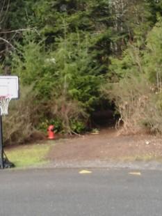 Parkdale Trail 2