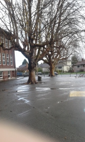 Willows Elementary GS london planes