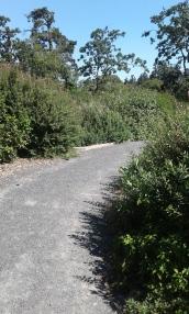 Yarrow Park trail