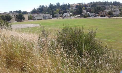 DND ball park